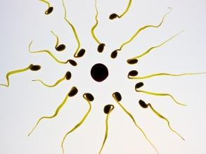 sperm-956481_960_720